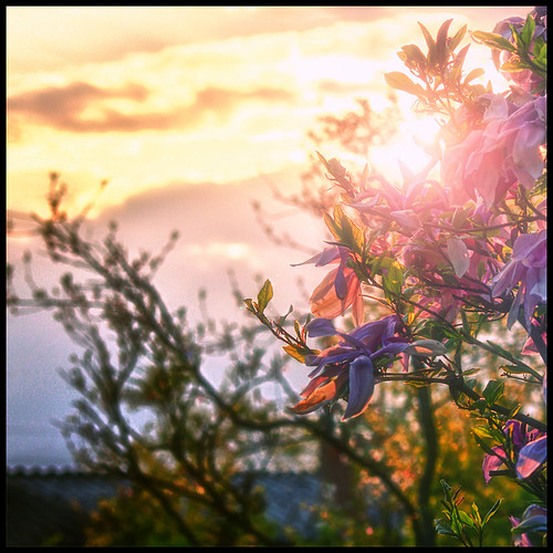 sunset sky sun nature clouds spring