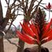 Ni idea como se llama esta planta por Cristian Marin