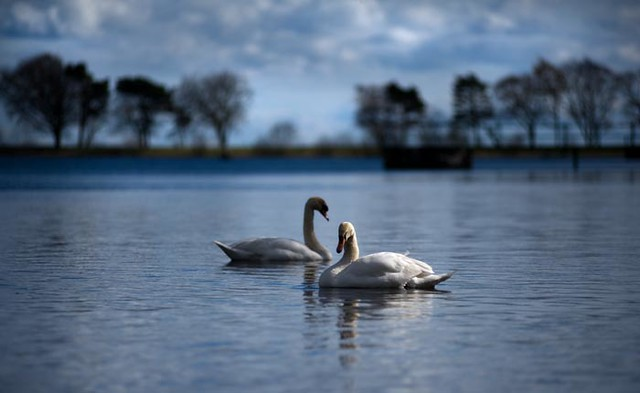 Graceful Simplicity - Calm Nature Scene - Tayside Scotland