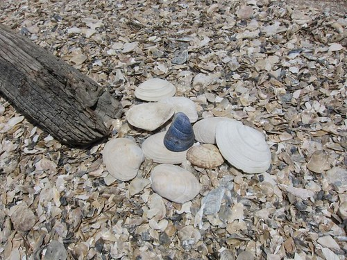 Shell Beach IMG_5928