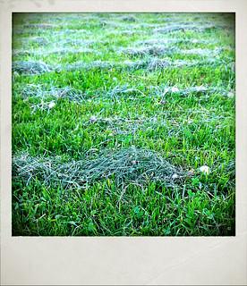 (158/365) Mawn grass