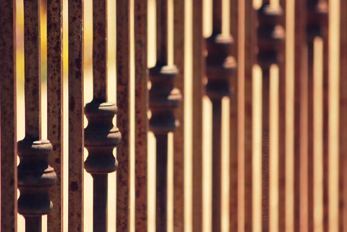 happy fence friday::feeling fenced in