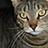 wendy rogers - @tigerbreath - Flickr