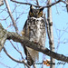 Great Horned Owl by SewerDoc. (Thanks - 1 million views)