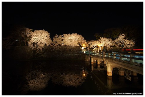 Cherry blossoms in the night #01