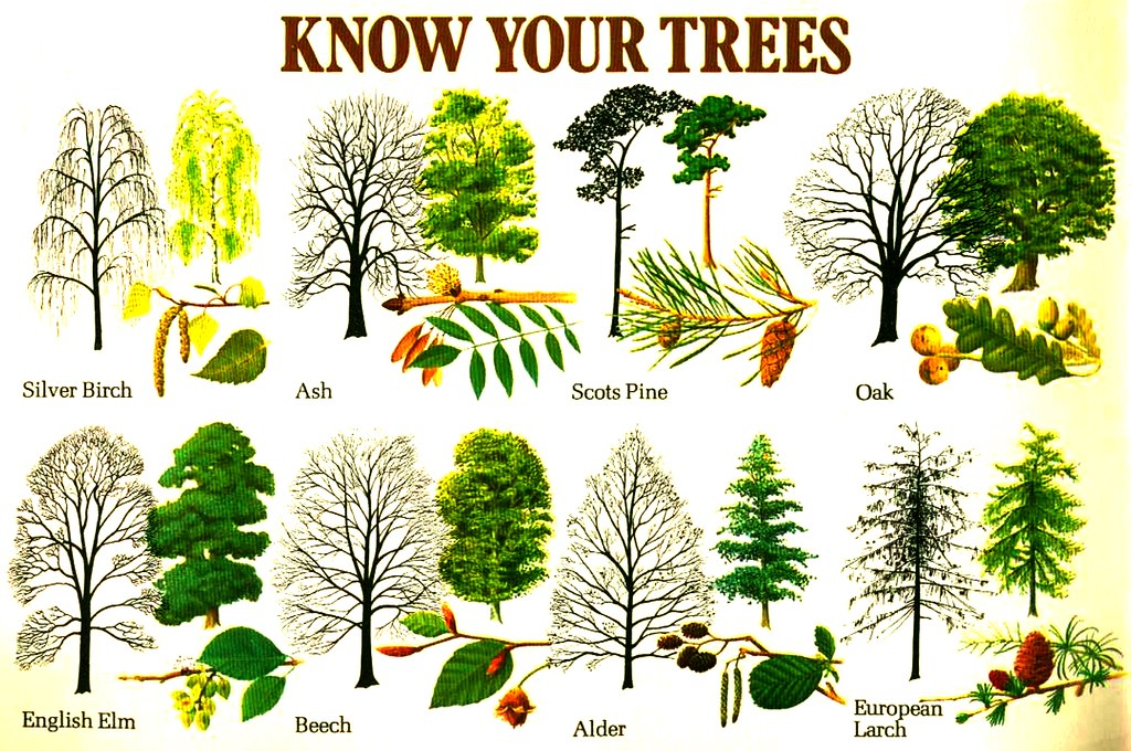 Know Your Trees A Photo On Flickriver