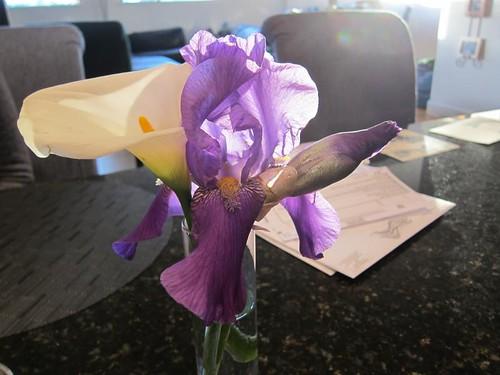 bearded iris, calla lily, backlit, voting ballot IMG_5450