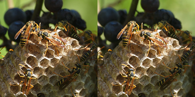 3D Paper Wasps, again.