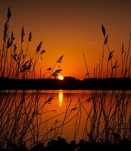 sunset reeds denmark skinnyde april fjord danmark 2011 hjarbæk gettyimagesdenmarkq2