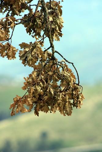 Leaf me a leaf