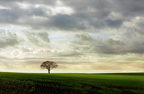 Ever felt like a lonely tree on a field... ?