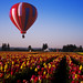Hot AIr Balloon & The Tulip Festival