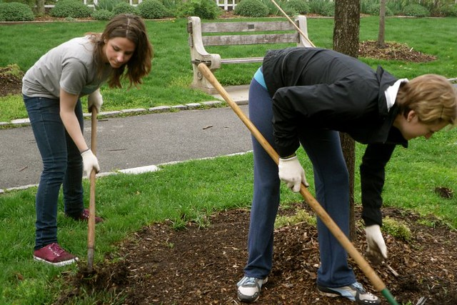 Weeding and mulching the liberty maples. Photo by Kathryn Littlefield.