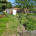 Small photo of The Allotment