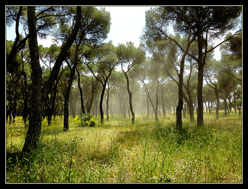 casadecampo casadecampodemadrid gardens jardines casadecampopark parquesdemadrid jardinesdemadrid madrid naturaleza nature mountainbike sports españa spain espagne eloyrodríguez eloyrodriguez mygearandme mygearandmepremium mygearandmebronze mygearandmesilver mygearandmegold mygearandmeplatinum mygearandmediamond getty images gettyimages park parque springcolors spring primavera