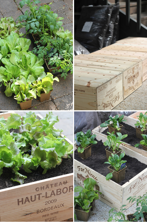 Diy wine box vegetable garden the style files for Diy vegetable garden