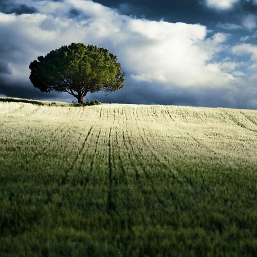 france clouds landscape nuages paysage aude lonelytree languedocroussillon blé world100f visionquality blinkagain 110515082 alentoursetailleurs rememberthatmomentlevel1 paulsiemen