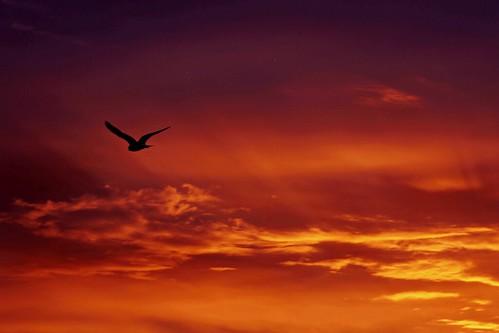 morning bird sunrise colorful seagull flight daarklands daarklandsexcellence