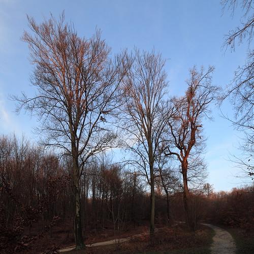 Skeleton Trees in Sunset