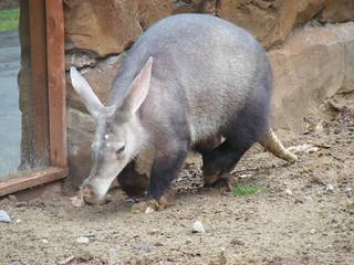'Aardvark' by Marie Hale