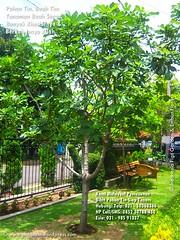 Pohon Tin Pohon Ara 021-50363366