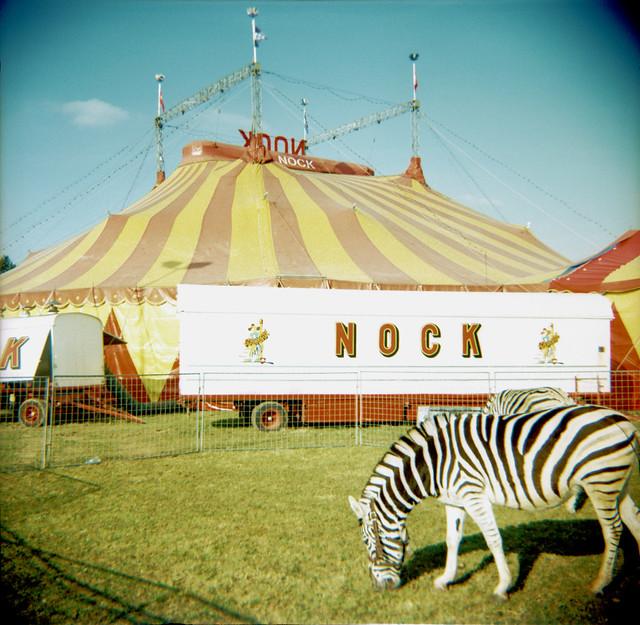 Circus Zebra by schoeband