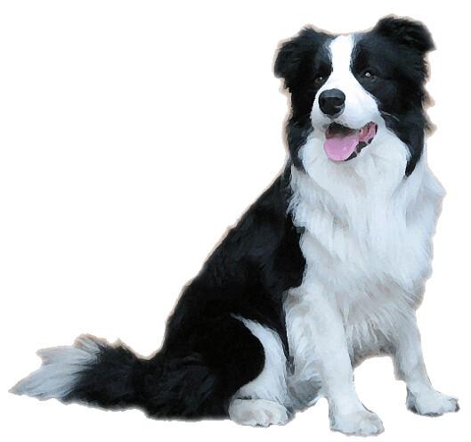 Large Dog Brush