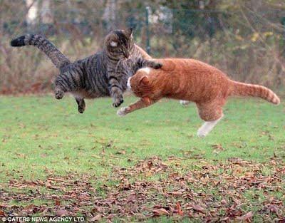 Foto Gambar Lucu Aneh Ajaib Kucing Tarung Ala Ninja Dah