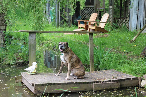 Chillin' By the Pond - Silver