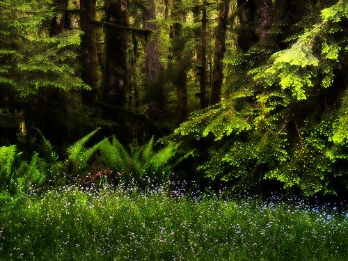 lakecrescent forest woods wa wildflowers ferns pnw alongtheroad olympicnationalforest 1bluecanoe
