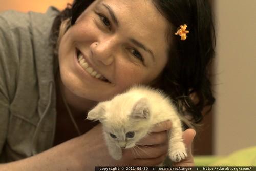 ahhh   the cute   it burns!   8 week old kitten with rachel's face