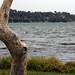 Small photo of Warners Bay Foreshore to Eleebana