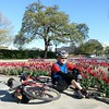 A randonneur among the tulips #30aysofbiking #bikedc