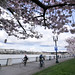 Cherry blossoms in Waterfront Park-8-7