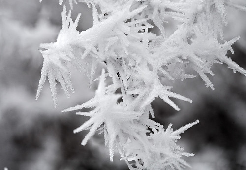 More of the big Hoar Frost