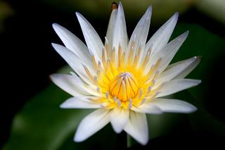Εικόνα από Tropical Spice Garden. travel canon garden photography eos asia outdoor spice malaysia tropical penang batu pulau pinang ferringhi