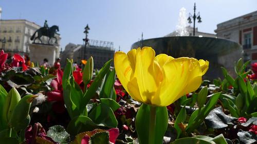 Primavera en la Puerta del Sol (Madrid)
