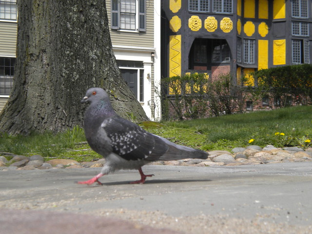Sidewalk King by Molly EB on Flickr for State of the Environment