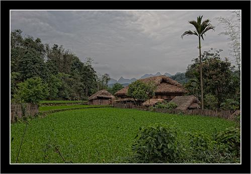 voyage nikon vietnam marcos rizière d700 marco971 thahamlet