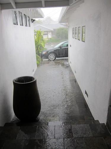 rain, downpour, coco cannon, coco canon IMG_5378