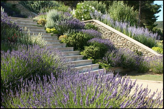 Lavender against stone terrace steps flickr photo sharing for Terrace steps