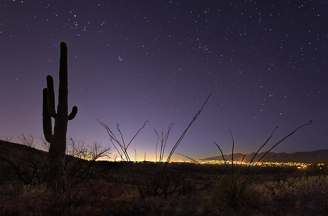 Tucson City Lights from Saguaro National Park
