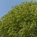 Small photo of Feuillage vert et ciel bleu