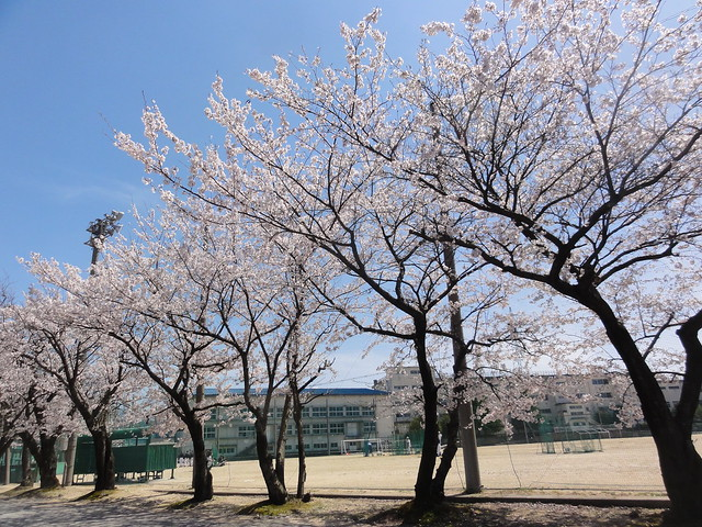 Photo:桜井中学校(SAKURAI Junior high school) By inazakira