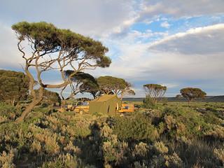 Morning sunrise at Mundrabilla camp