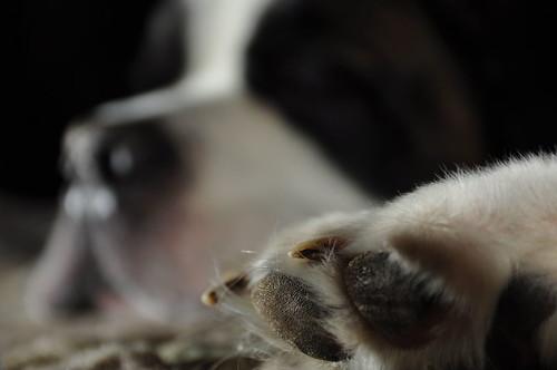 dog ontario canada paw stbernard wormseyeview cedarvalley eyefi wevs