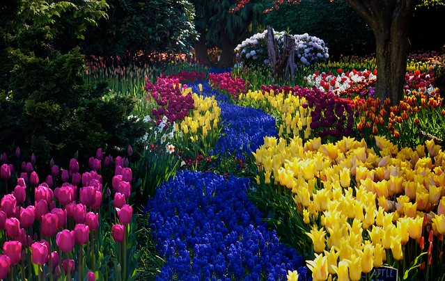 Annual Flower Bed Formal Full Sun