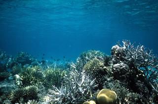 Lagoon, underwater, Fiji -- 4