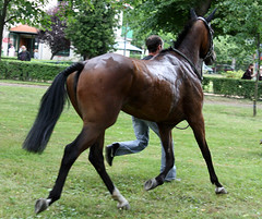 equestrianism(0.0), english riding(0.0), eventing(0.0), dressage(0.0), colt(0.0), equestrian sport(0.0), endurance riding(0.0), foal(0.0), mustang horse(0.0), animal sports(1.0), animal(1.0), mane(1.0), mare(1.0), stallion(1.0), rein(1.0), animal training(1.0), mammal(1.0), bridle(1.0), horse(1.0), pasture(1.0),
