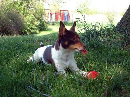 2005-05-04 - DogsChasingSquirrels-0030